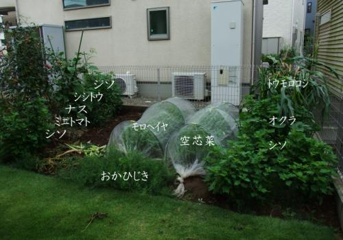 ガーデニング2019(家庭菜園まとめ)_e0031249_14372062.png