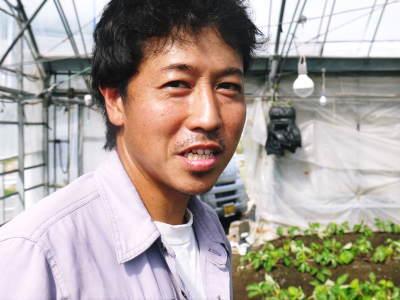 熊本限定栽培品種のイチゴ『熊紅(ゆうべに)』定植後の様子 令和元年度は12月上旬から出荷予定!_a0254656_18095585.jpg