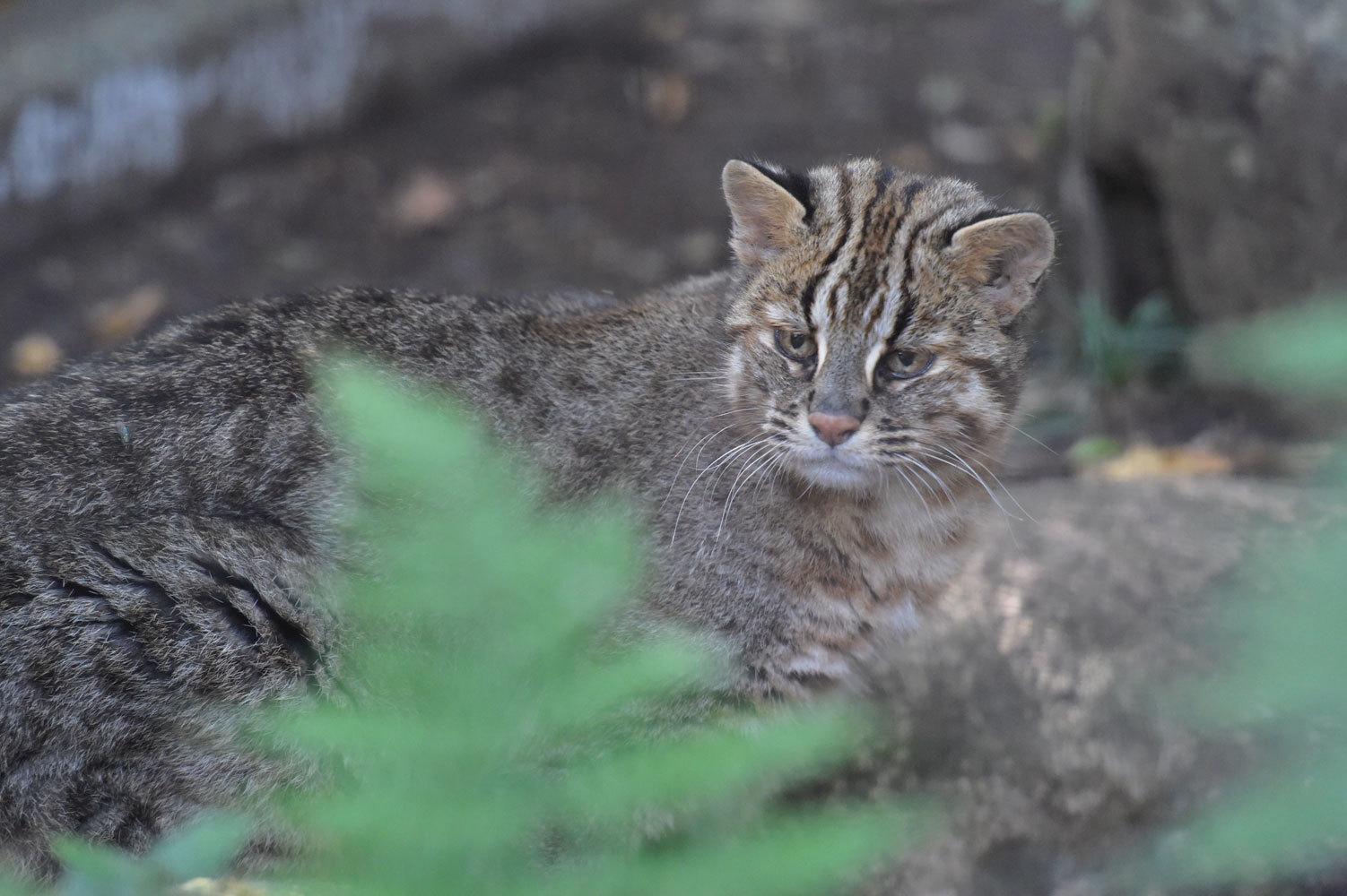 移り変わる季節を動物で知る_b0023856_06581109.jpg