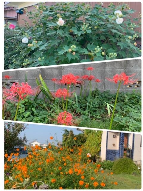 秋のお花&グッズ_e0040673_12284214.jpg