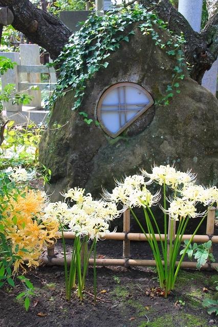 鎌倉の秋の花 宝戒寺 彼岸花_f0374092_16315654.jpg