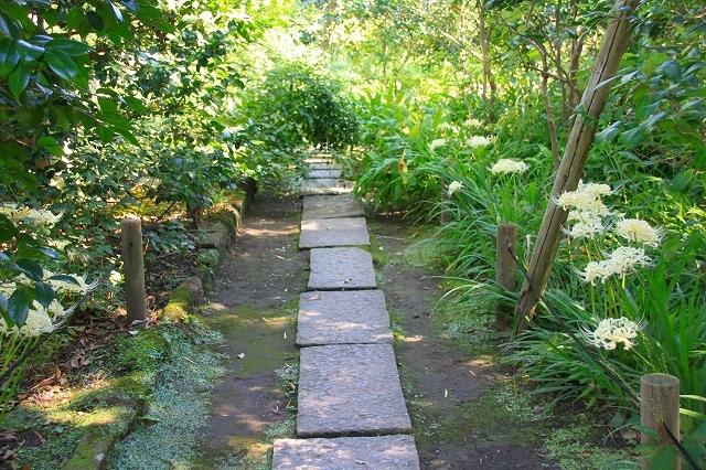 鎌倉の秋の花 宝戒寺 彼岸花_f0374092_16332178.jpg