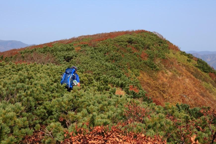 紅葉が見頃の無意根山、2019.10.2ー同行者からの写真ー_f0138096_09473775.jpg