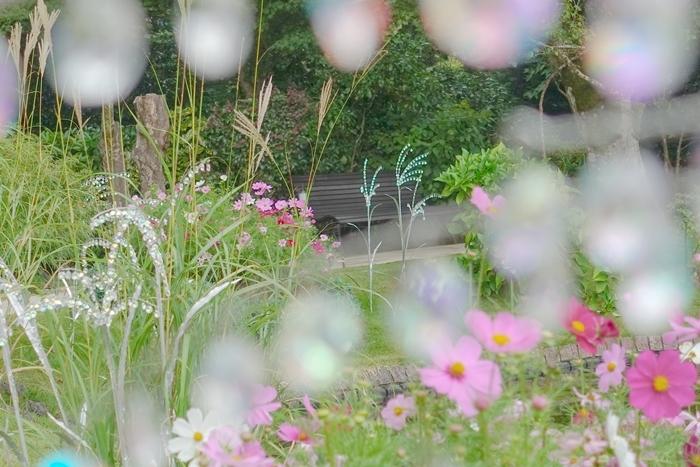 秋の箱根ガラスの森美術館 コスモスとクリスタルガラスの競演_b0145398_23054845.jpg