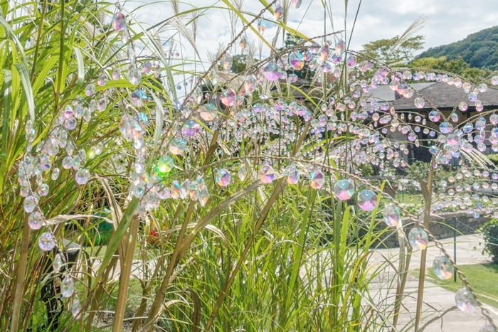 秋の箱根ガラスの森美術館 ススキとクリスタルガラスのススキの競演_b0145398_23551911.jpg