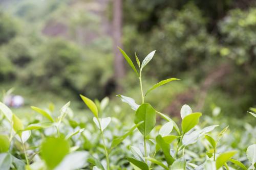 10月13日(日)は月に一度の中国茶教室の日です!_d0293004_21162437.jpg