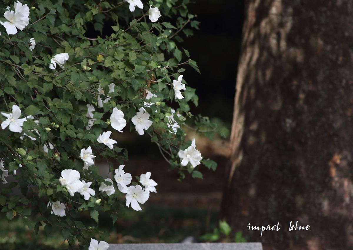 睡蓮の咲く公園に行ってみた(^^)/_a0355908_13071340.jpg