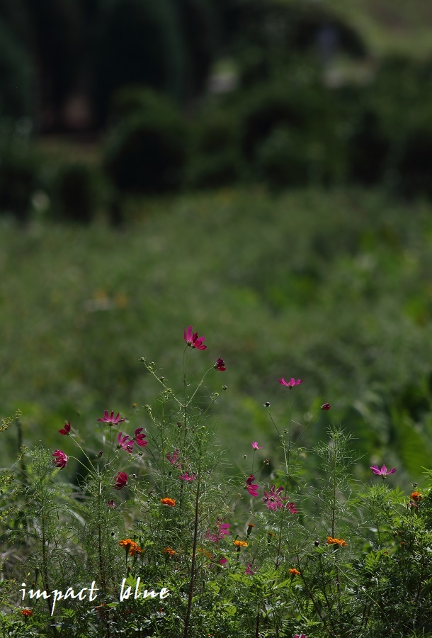 睡蓮の咲く公園に行ってみた(^^)/_a0355908_13072329.jpg