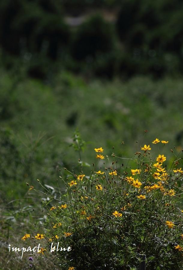 睡蓮の咲く公園に行ってみた(^^)/_a0355908_13072860.jpg
