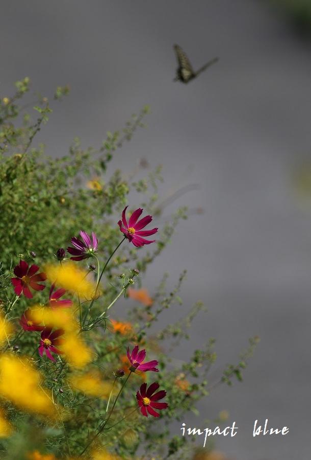 睡蓮の咲く公園に行ってみた(^^)/_a0355908_13073742.jpg