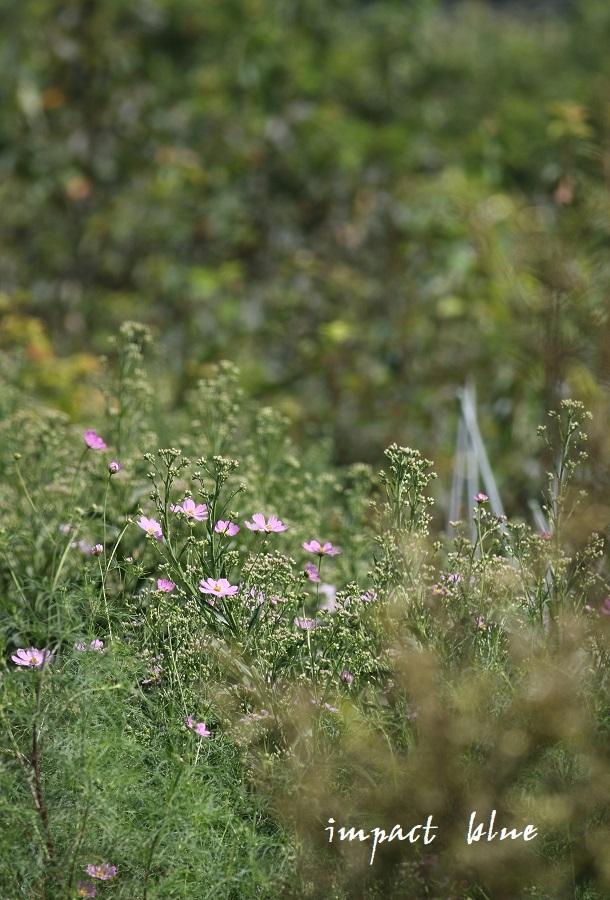 睡蓮の咲く公園に行ってみた(^^)/ ~続~_a0355908_13251660.jpg