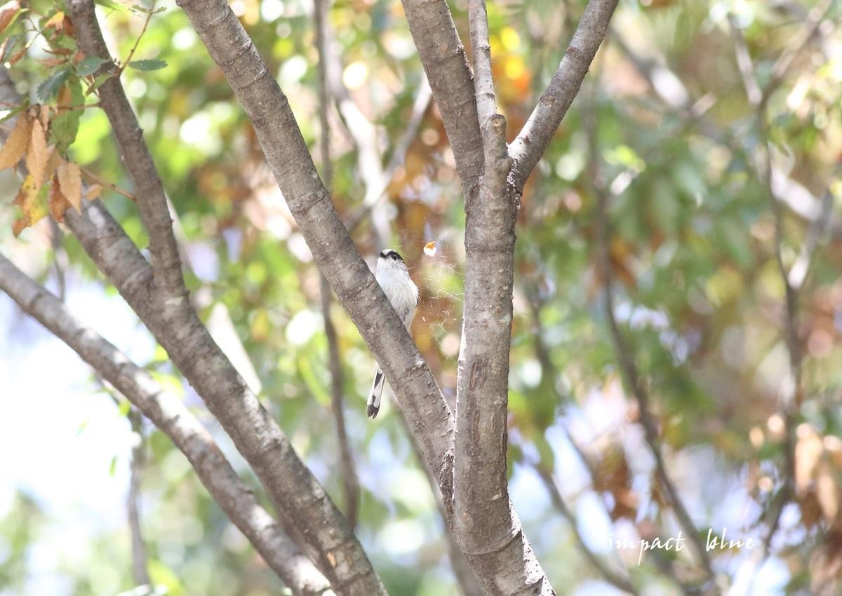 睡蓮の咲く公園に行ってみた(^^)/ ~最終回~_a0355908_13462224.jpg