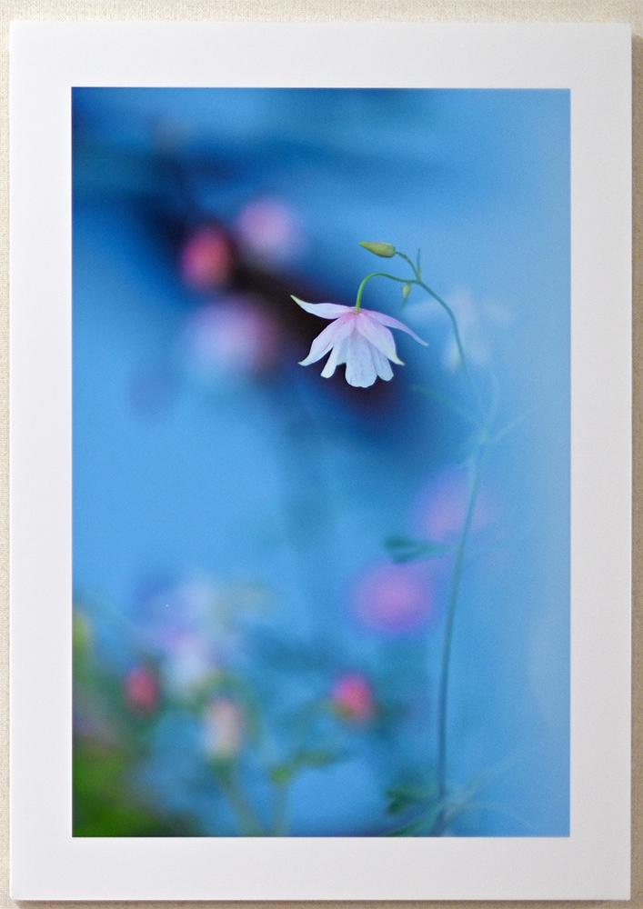日記のような写真さんのお花畑_d0265224_23045861.jpg