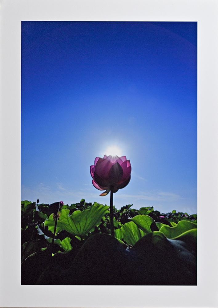 日記のような写真さんのお花畑_d0265224_23045881.jpg