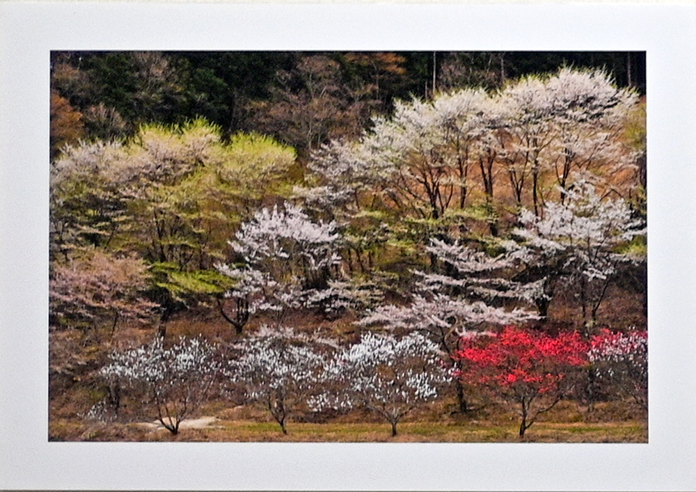 日記のような写真さんのお花畑_d0265224_23091583.jpg