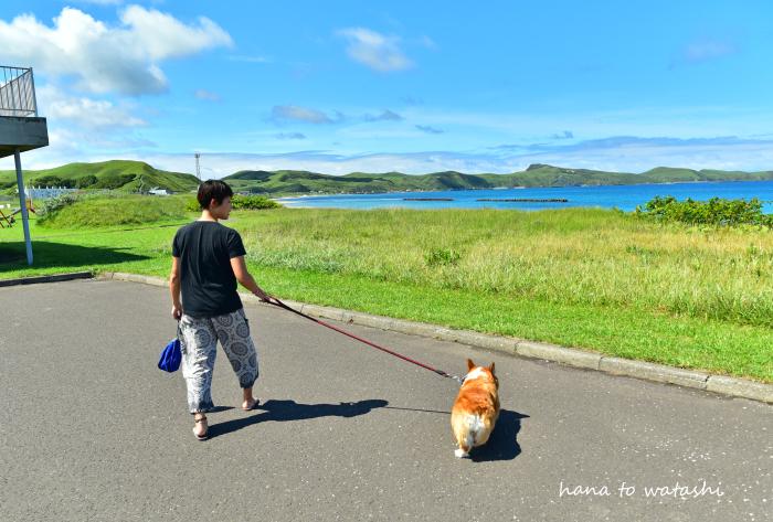 夏の浜辺でハナ散歩_e0120026_12562644.jpg