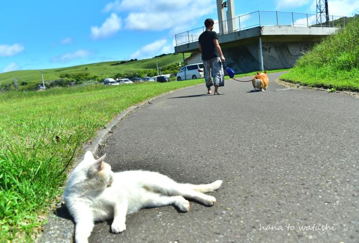 夏の浜辺でハナ散歩_e0120026_13134004.jpg