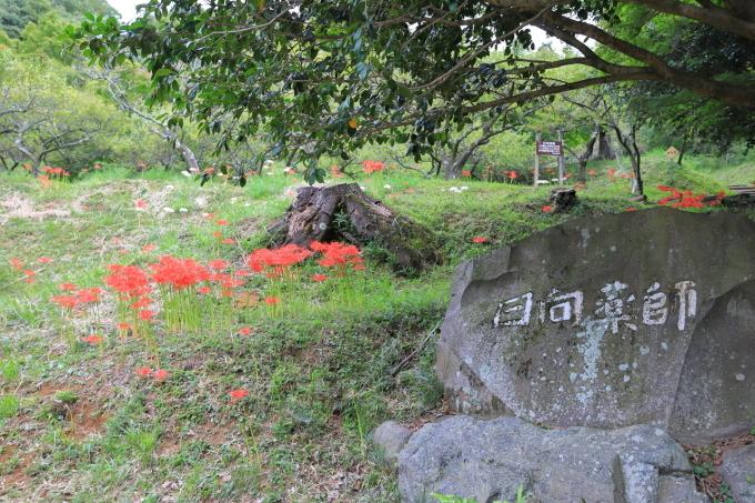 【宝城坊 日向薬師】_f0348831_23045857.jpg