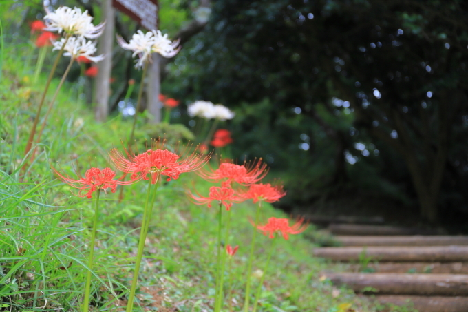 【宝城坊 日向薬師】_f0348831_23045941.jpg