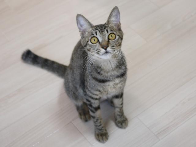 猫のお留守番 ローリエちゃん編。_a0143140_22154347.jpg