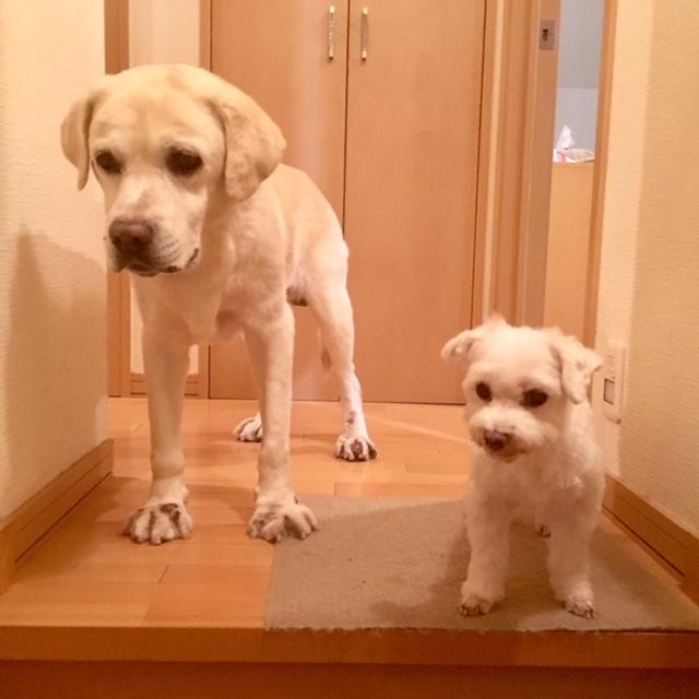 dogs  並んで♪_a0165160_15540590.jpg