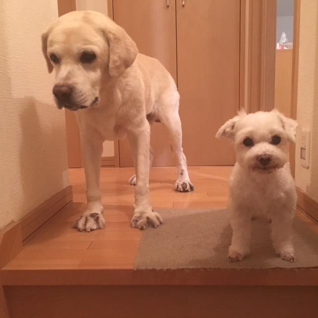 dogs  並んで♪_a0165160_16202381.jpg