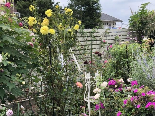 10月上旬の庭の様子「ダリア」「ロシアンセージ」「ムクゲ」_a0243064_18503605.jpg