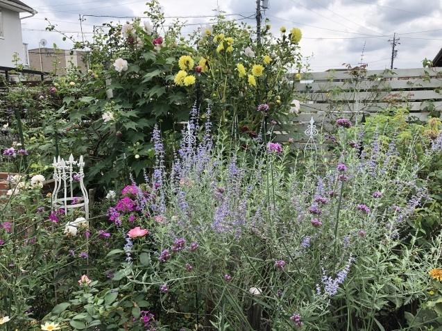 10月上旬の庭の様子「ダリア」「ロシアンセージ」「ムクゲ」_a0243064_18505670.jpg