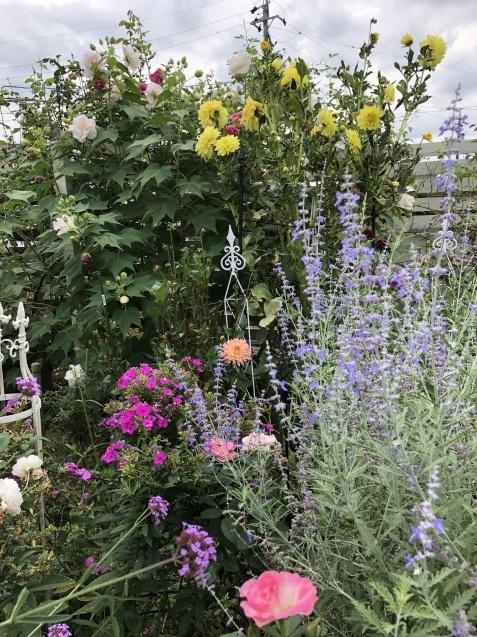 10月上旬の庭の様子「ダリア」「ロシアンセージ」「ムクゲ」_a0243064_18513546.jpg