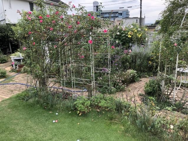 10月上旬の庭の様子「ダリア」「ロシアンセージ」「ムクゲ」_a0243064_18520416.jpg