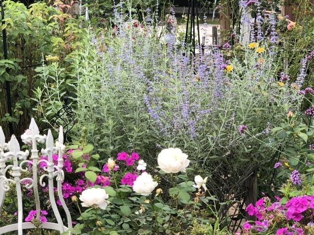 10月上旬の庭の様子「ダリア」「ロシアンセージ」「ムクゲ」_a0243064_18525588.jpg