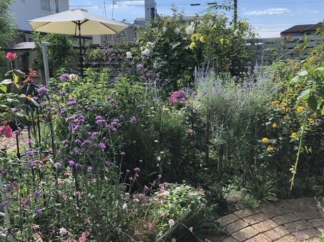 10月上旬の庭の様子「ダリア」「ロシアンセージ」「ムクゲ」_a0243064_18534766.jpg