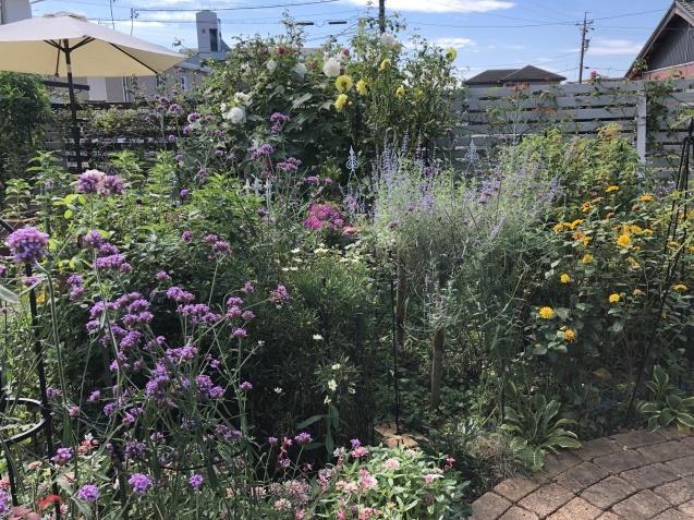 10月上旬の庭の様子「ダリア」「ロシアンセージ」「ムクゲ」_a0243064_18541745.jpg