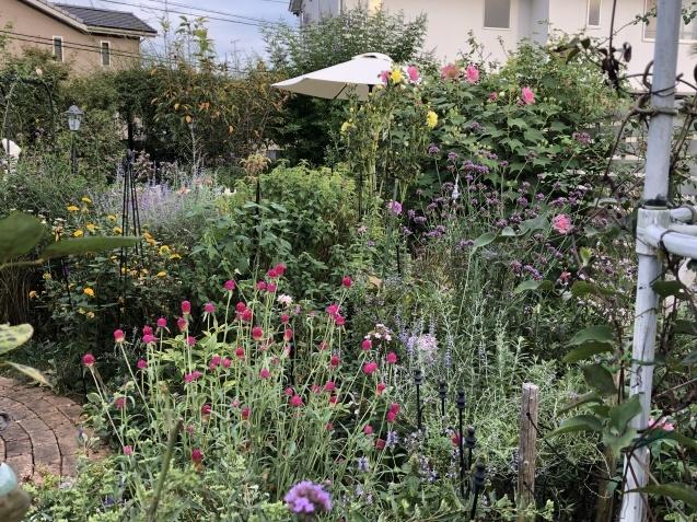 10月上旬の庭の様子「ダリア」「ロシアンセージ」「ムクゲ」_a0243064_18563967.jpg