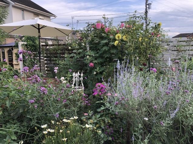 10月上旬の庭の様子「ダリア」「ロシアンセージ」「ムクゲ」_a0243064_18570485.jpg