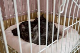 4ヶ月の仔猫3匹、里親さん募集中!→決定しました!_e0135972_16325954.jpg