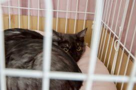 4ヶ月の仔猫3匹、里親さん募集中!→決定しました!_e0135972_16331730.jpg