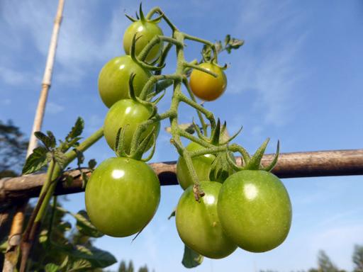 自然農畑 9月下旬~10月上旬_d0366590_19515143.jpg