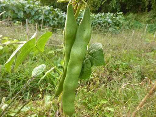 自然農畑 9月下旬~10月上旬_d0366590_19515177.jpg