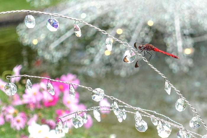 秋の箱根ガラスの森美術館 SONY RX100M5で撮るクリスタルガラスの輝き_b0145398_19195584.jpg