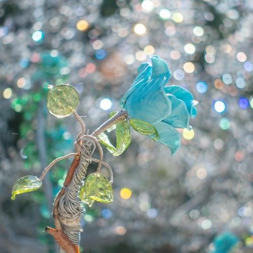 秋の箱根ガラスの森美術館 SONY RX100M5で撮るクリスタルガラスの輝き_b0145398_19231084.jpg