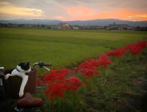 秋色サイクリング。_d0077603_14272394.jpg