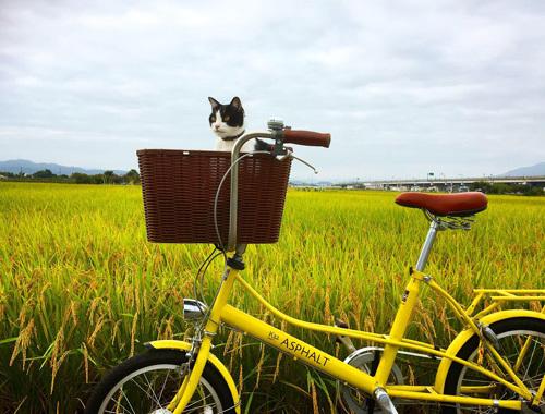 秋色サイクリング。_d0077603_14273199.jpg