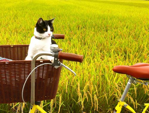 秋色サイクリング。_d0077603_14283143.jpg