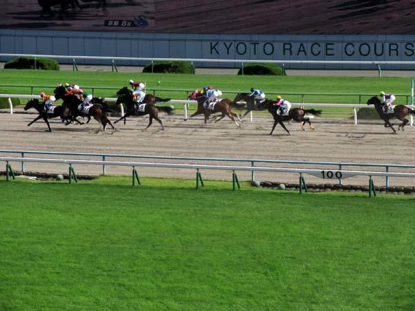 京都競馬場へ行った_e0048413_22285374.jpg