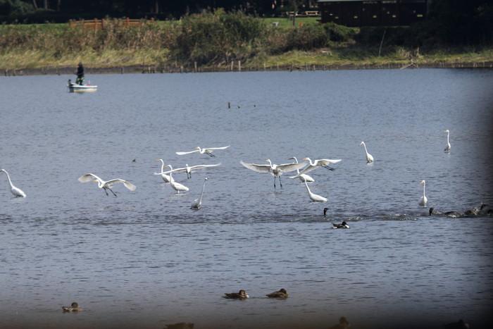 我が町が日本遺産の「里沼」に認定されました_f0239515_174226.jpg