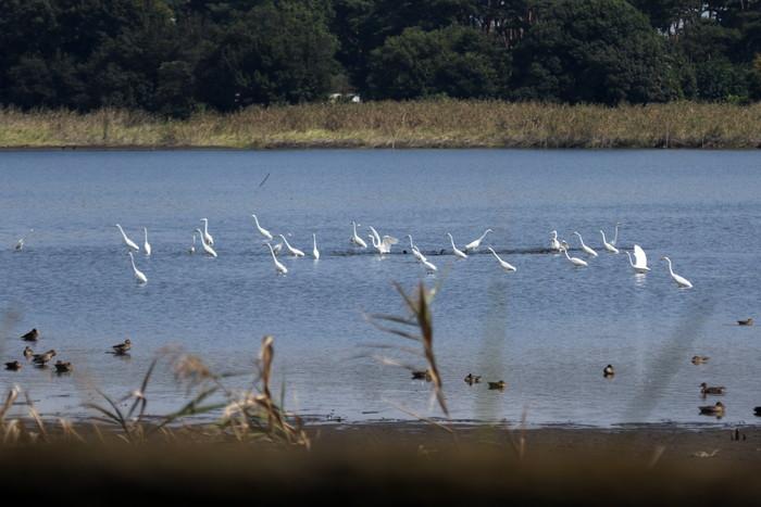我が町が日本遺産の「里沼」に認定されました_f0239515_1744473.jpg