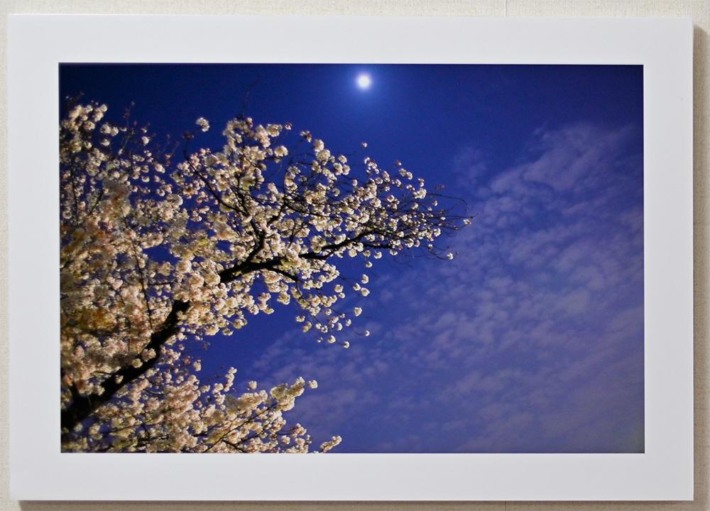 日記のような写真さんのお花畑_d0265224_00391646.jpg