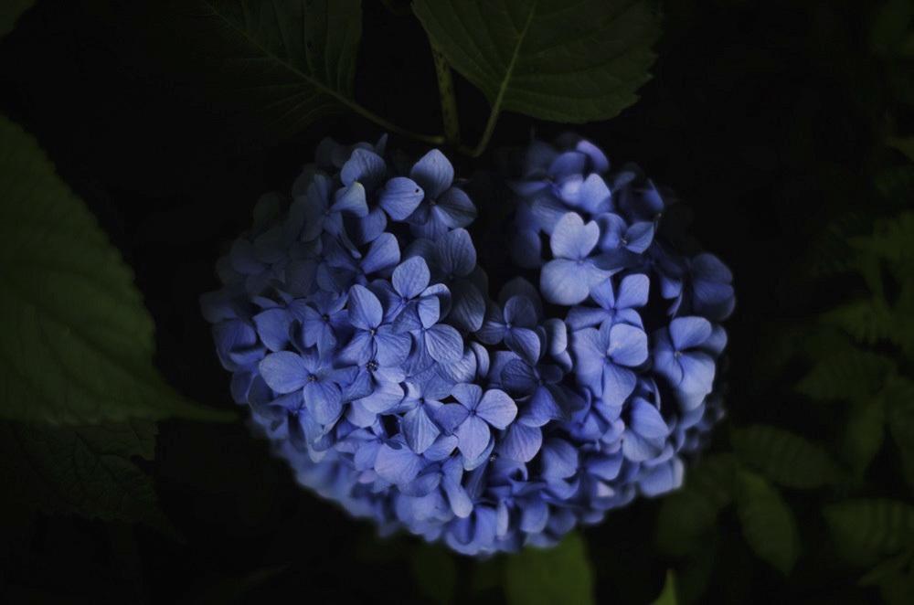 ai...ting wo shuoさんのお花畑_d0265224_18273767.jpg