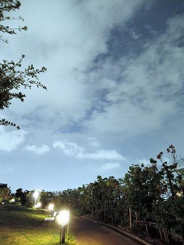 天空の庭で_c0062832_16124534.jpg